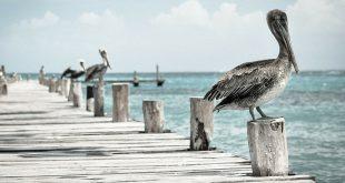 Ab in den Urlaub! Fotocredit: pixabay.com